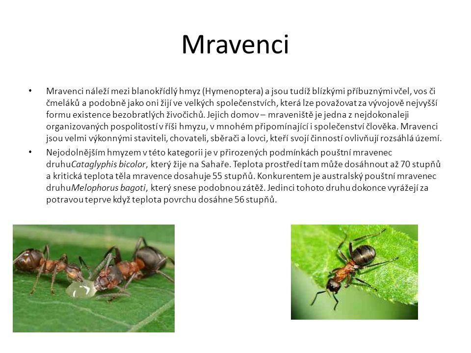 Mravenci Mravenci náleží mezi blanokřídlý hmyz (Hymenoptera) a jsou tudíž blízkými příbuznými včel, vos či čmeláků a podobně jako oni žijí ve velkých