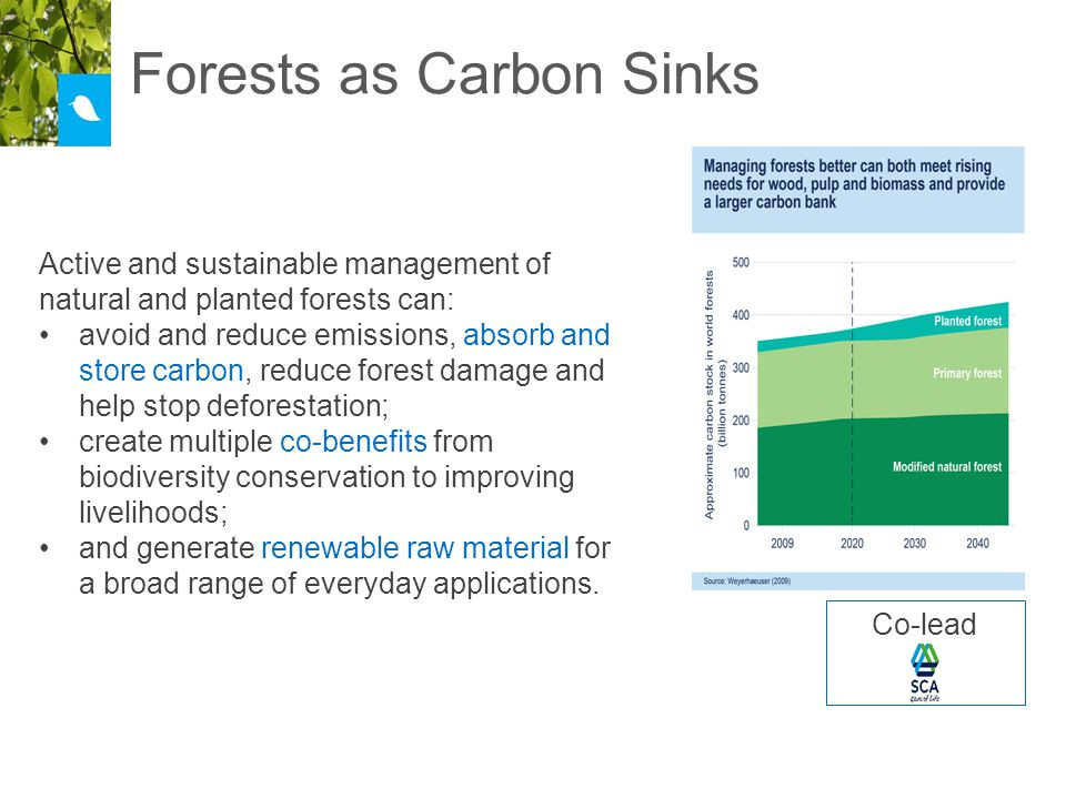 Forests as Carbon Sinks Active and sustainable management of natural and planted forests can: avoid and reduce emissions, absorb and store carbon, reduce forest damage and help stop deforestation; create multiple co-benefits from biodiversity conservation to improving livelihoods; and generate renewable raw material for a broad range of everyday applications.