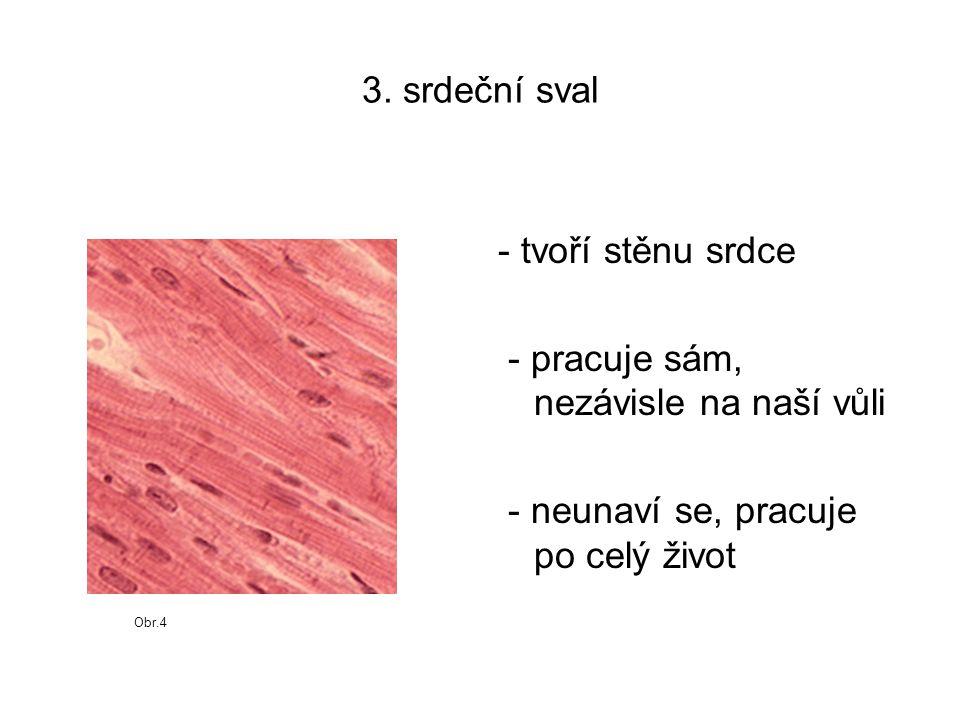 Obr.5 Stavba svalu kost šlacha svalové bříško (hlava) snopec svalové vlákno vazivová blána - povázka cévy