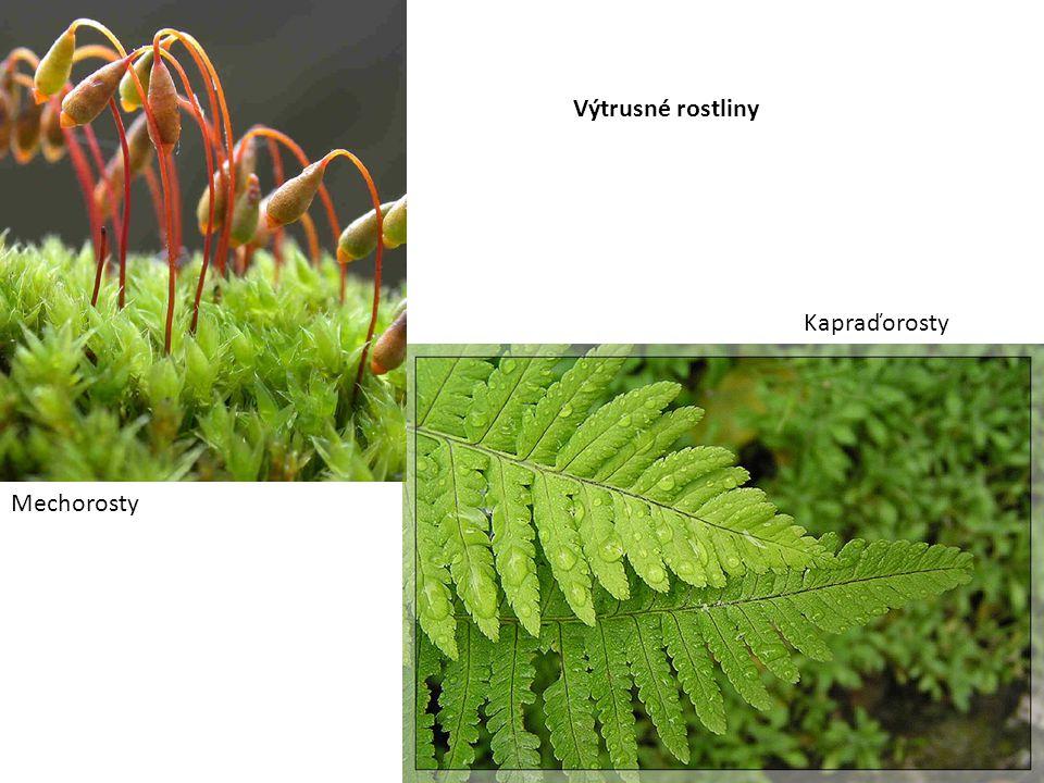 Mechorosty Kapraďorosty Výtrusné rostliny