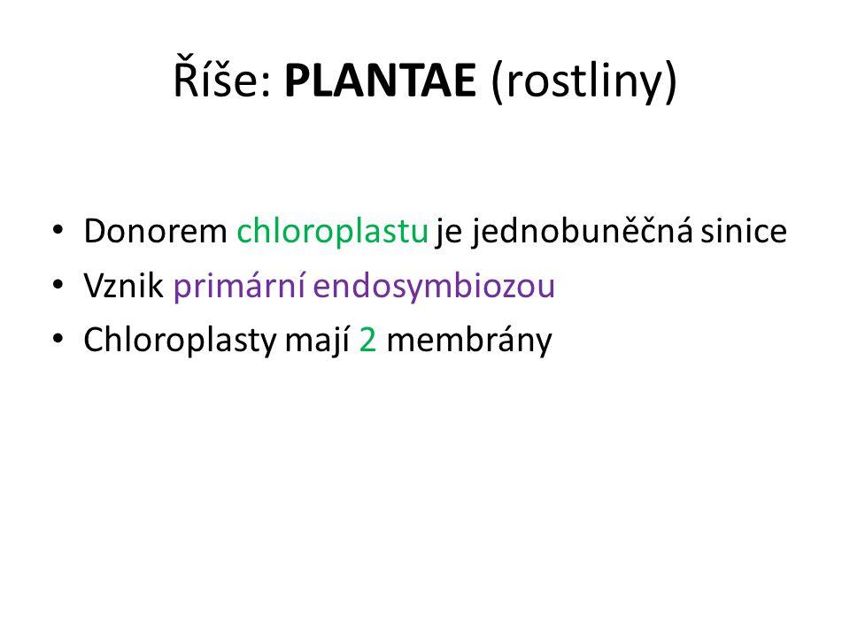 Říše: PLANTAE (rostliny) Donorem chloroplastu je jednobuněčná sinice Vznik primární endosymbiozou Chloroplasty mají 2 membrány