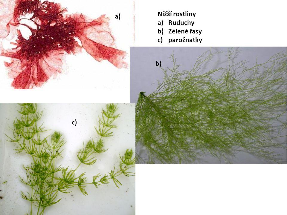 Nižší rostliny a)Ruduchy b)Zelené řasy c)parožnatky a) c) b)