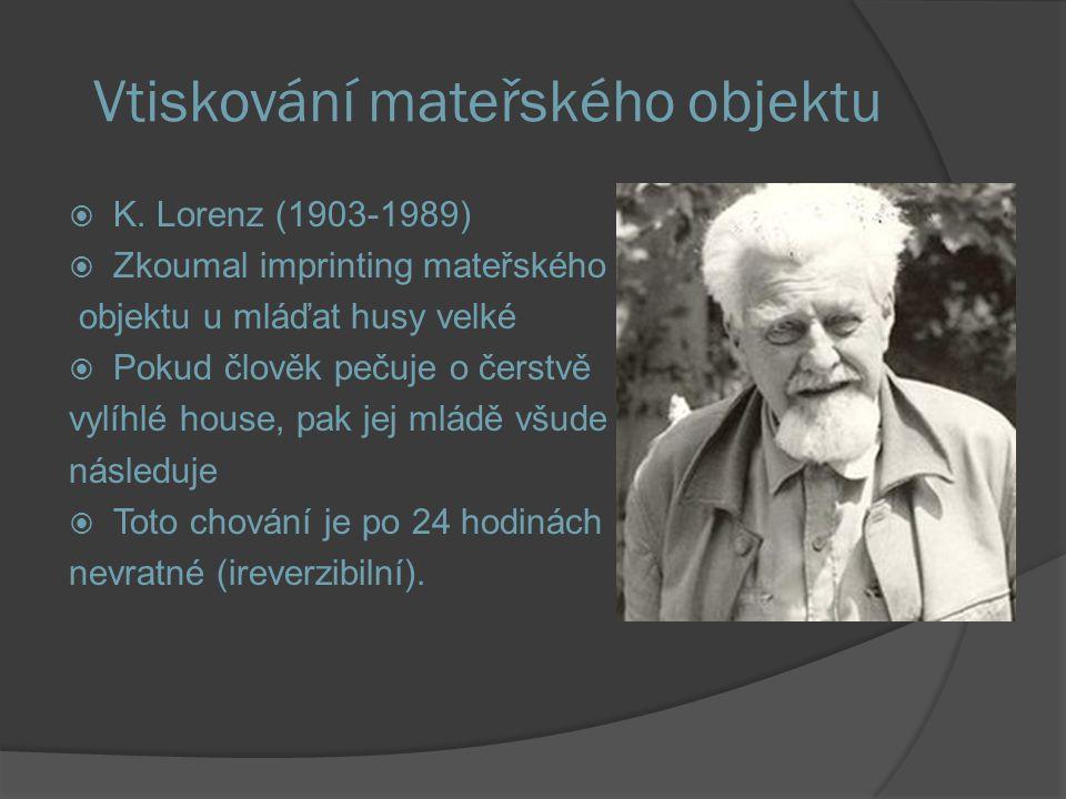 Vtiskování mateřského objektu  K. Lorenz (1903-1989)  Zkoumal imprinting mateřského objektu u mláďat husy velké  Pokud člověk pečuje o čerstvě vylí