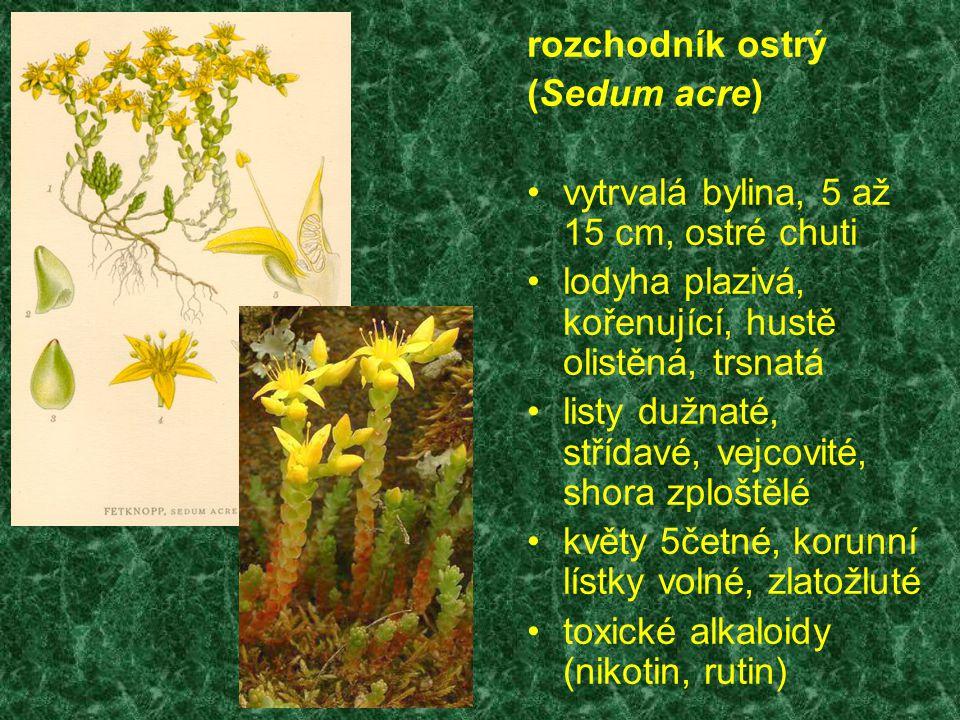 rozchodník ostrý (Sedum acre) vytrvalá bylina, 5 až 15 cm, ostré chuti lodyha plazivá, kořenující, hustě olistěná, trsnatá listy dužnaté, střídavé, vejcovité, shora zploštělé květy 5četné, korunní lístky volné, zlatožluté toxické alkaloidy (nikotin, rutin)