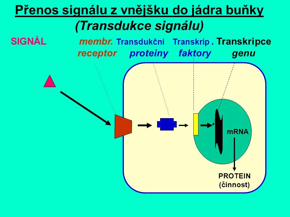 """""""NESMRTELNOST BUŇKY Normální somatická buňka má omezenou kapacitu proliferace danou určitým počtem možných dělení a řízenou opakovanou sekvencí konce DNA - TTAGGG tzv."""