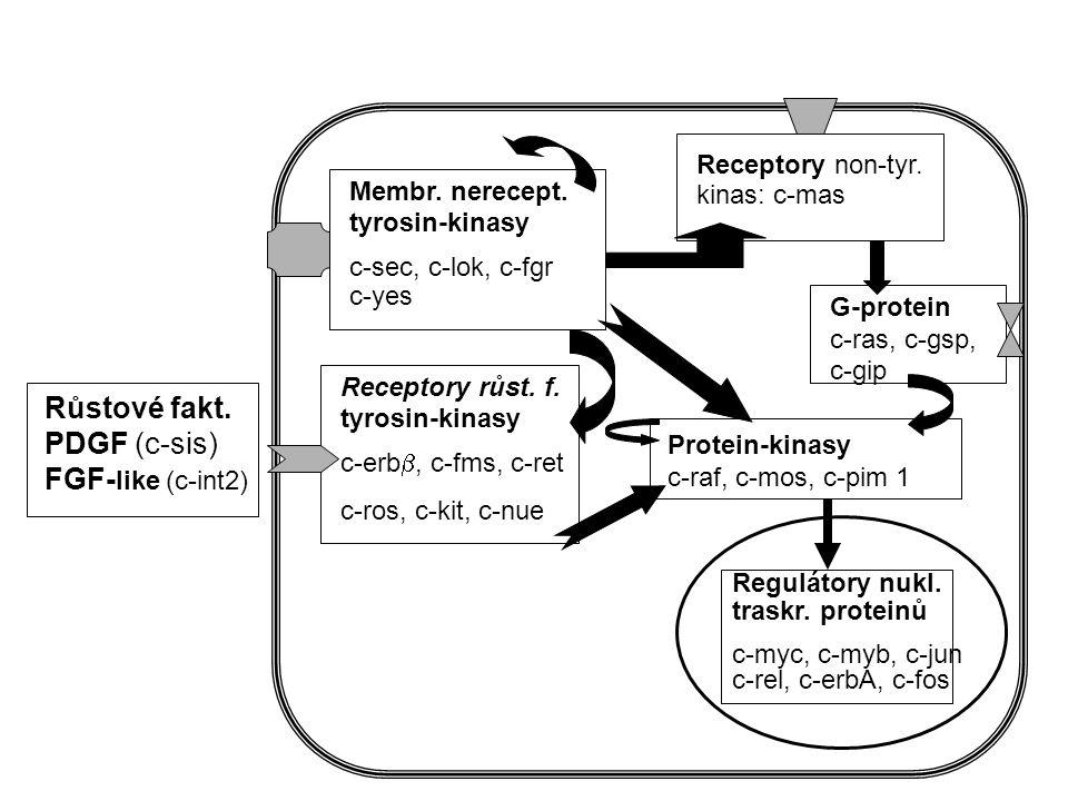 Přenos signálu z vnějšku do jádra buňky (Transdukce signálu) mRNA SIGNÁL membr.