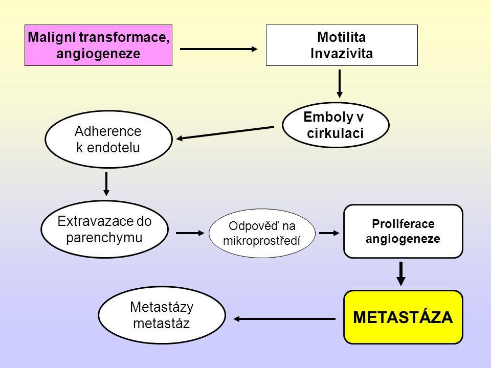 METASTATICKÝ (invazivní) FENOTYP Zvýšení motility (invazivita) (průnik do stromatu a přes cévní stěnu) Vytváření embolů v cirkulaci Adherence ke stěně cévy Průnik do parenchymu Vytvoření metastázy (proliferace v místě, angiogeneze, odpověď na mikroprostředí) Metastázy metastáz Nádorová generalizace