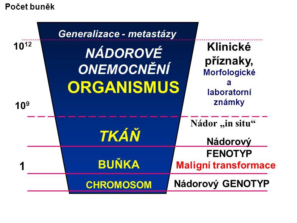 """GENY predisponující GENETICKOU INSTABILITU (Defekt v opravě chybné DNA pro poruchu v """"opravném čtení při replikaci DNA) Gen na chromosomu 2 Gen pro HNPCC (Hereditární nepolymatózní kolorektální karcinom) mutace"""