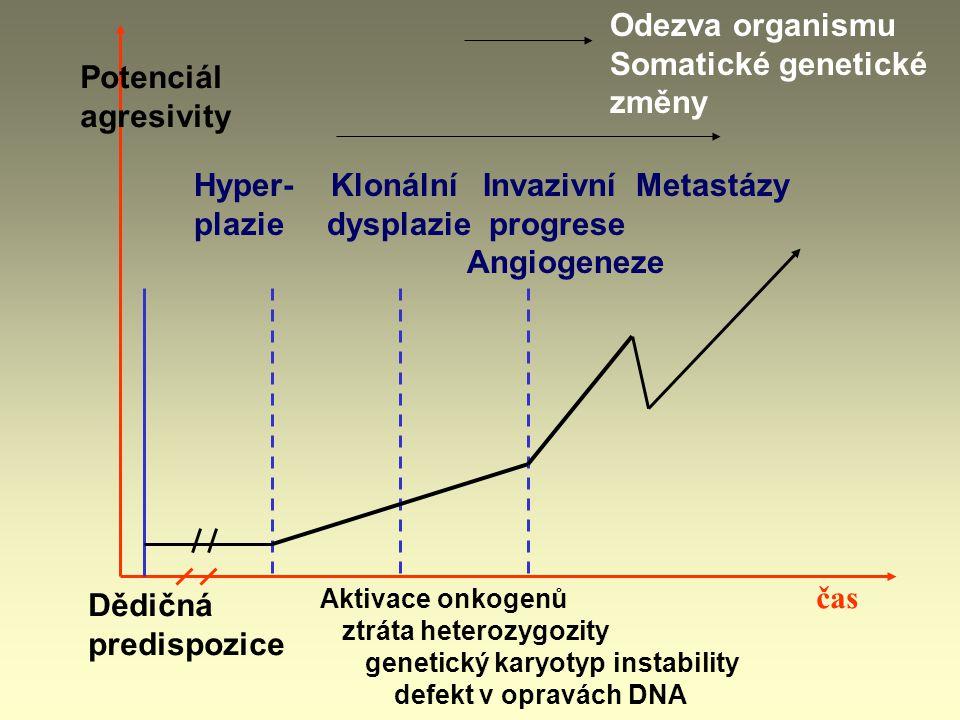 Hyper- Klonální Invazivní Metastázy plazie dysplazie progrese Angiogeneze Odezva organismu Somatické genetické změny Dědičná predispozice Aktivace onkogenů ztráta heterozygozity genetický karyotyp instability defekt v opravách DNA čas Potenciál agresivity