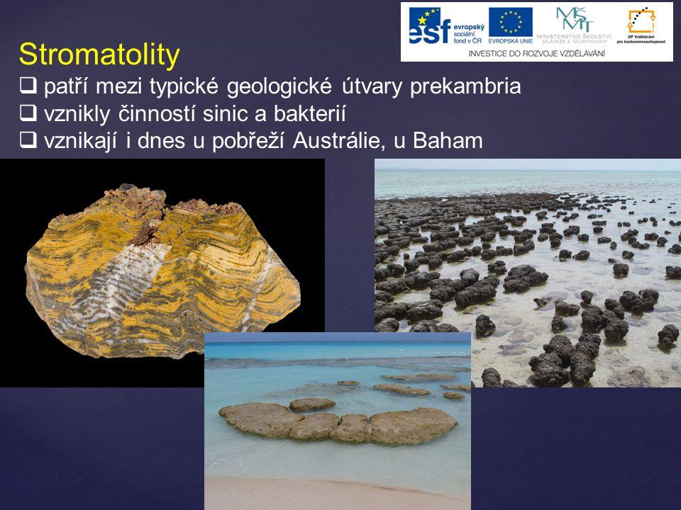 Stromatolity  patří mezi typické geologické útvary prekambria  vznikly činností sinic a bakterií  vznikají i dnes u pobřeží Austrálie, u Baham