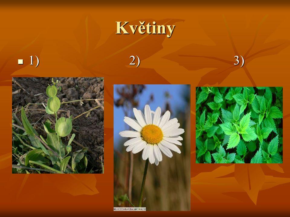 Květiny 1) 2) 3) 1) 2) 3)