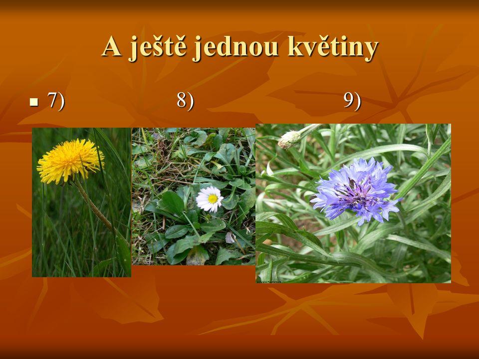 Další květiny 4) 5) 6) 4) 5) 6)