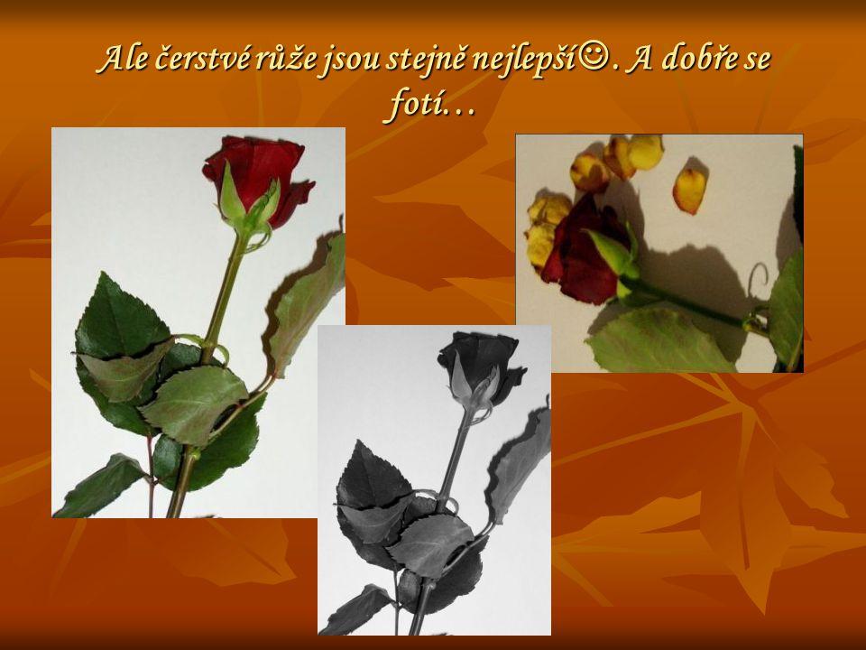 Ale čerstvé růže jsou stejně nejlepší. A dobře se fotí…