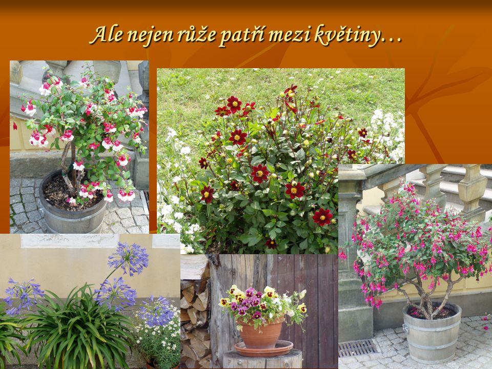 Ale nejen růže patří mezi květiny…