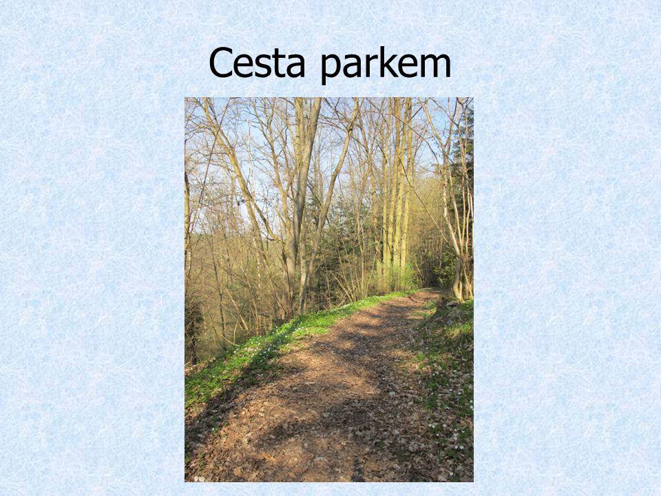 Cesta parkem