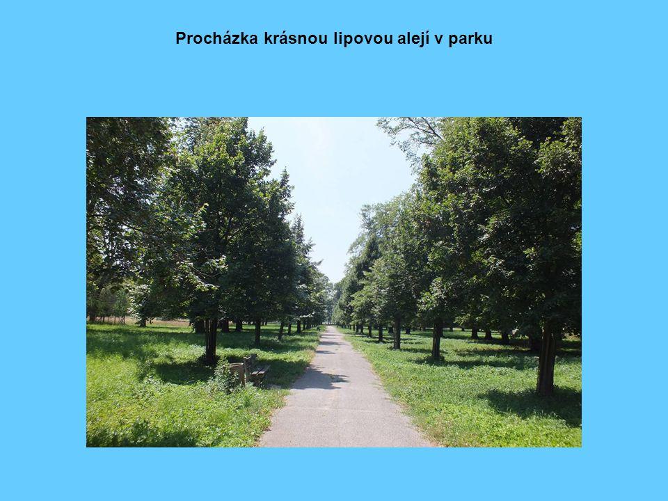 Procházka krásnou lipovou alejí v parku