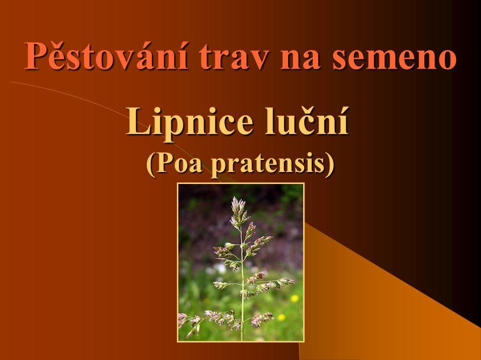 SOŠS a SOU KadaňVíceleté pícniny - Lipnice luční2 Význam pěstování trav  Jde o pěstování trav za účelem získání osiva.
