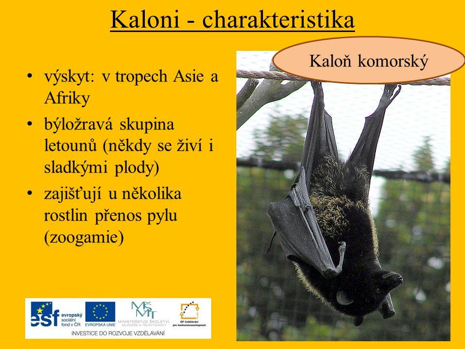 Kaloni - charakteristika výskyt: v tropech Asie a Afriky býložravá skupina letounů (někdy se živí i sladkými plody) zajišťují u několika rostlin přeno