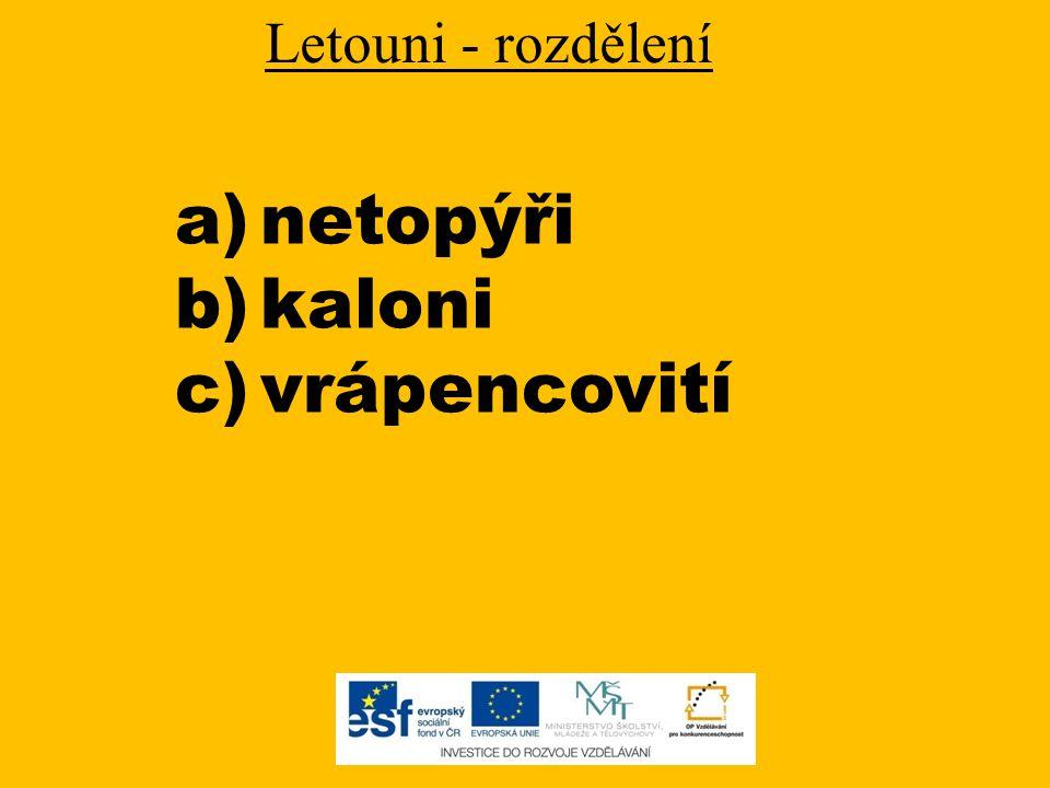 Netopýři - charakteristika drobní živočichové živí se převážně drobným hmyzem v ČR žije 24 druhů (jsou chráněny zákonem) létají rychlostí 20-50 km/h hibernace = zimní spánek