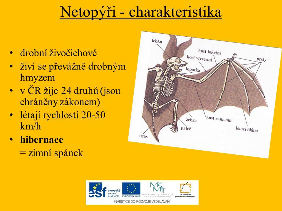 Netopýři - charakteristika drobní živočichové živí se převážně drobným hmyzem v ČR žije 24 druhů (jsou chráněny zákonem) létají rychlostí 20-50 km/h h