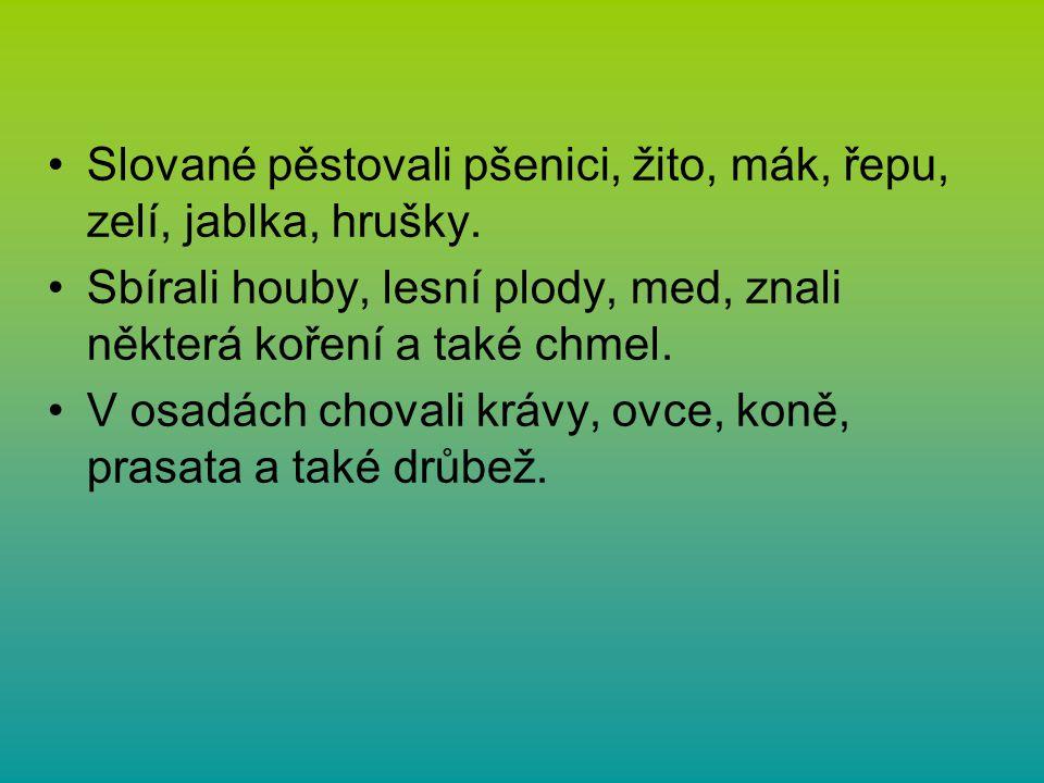 Slované pěstovali pšenici, žito, mák, řepu, zelí, jablka, hrušky. Sbírali houby, lesní plody, med, znali některá koření a také chmel. V osadách choval