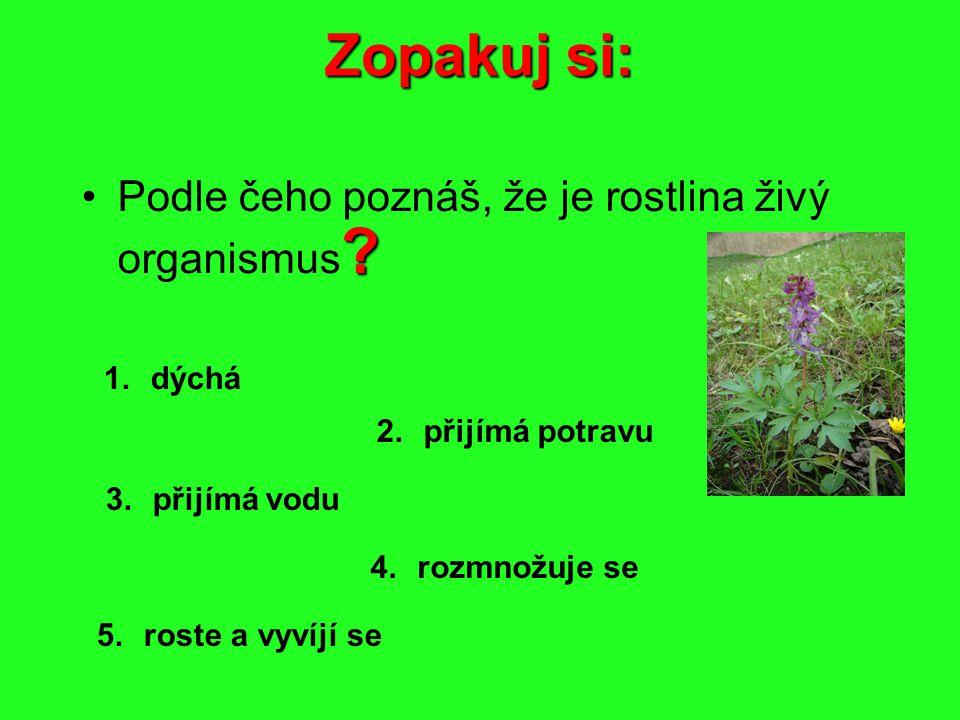 Zopakuj si: ?Podle čeho poznáš, že je rostlina živý organismus ? 1. dýchá 2.přijímá potravu 3. přijímá vodu 4. rozmnožuje se 5.roste a vyvíjí se