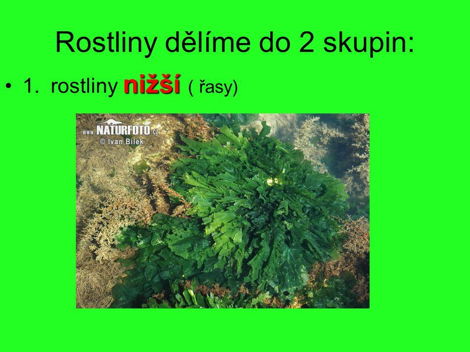 Rostliny dělíme do 2 skupin: nižší1.rostliny nižší ( řasy)