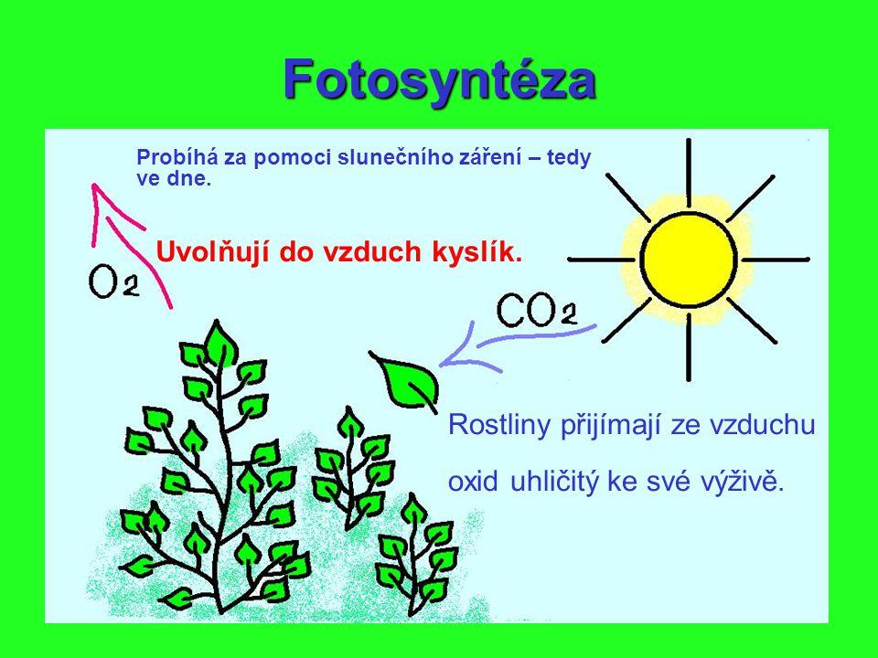 Fotosyntéza Rostliny přijímají ze vzduchu oxid uhličitý ke své výživě. Probíhá za pomoci slunečního záření – tedy ve dne. Uvolňují do vzduch kyslík.