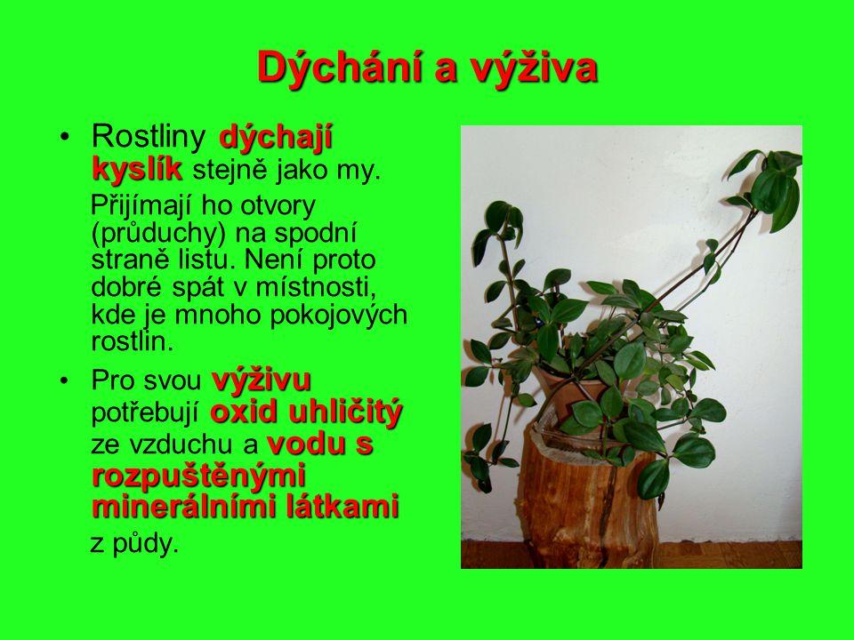 Dýchání a výživa dýchají kyslík Rostliny dýchají kyslík stejně jako my. Přijímají ho otvory (průduchy) na spodní straně listu. Není proto dobré spát v