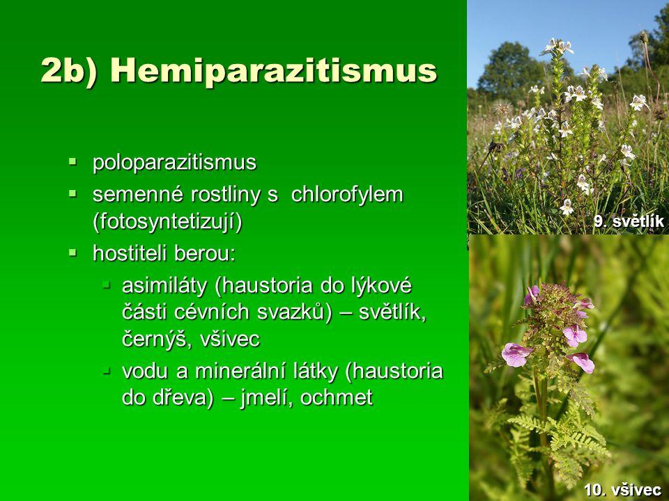 2b) Hemiparazitismus  poloparazitismus  semenné rostliny s chlorofylem (fotosyntetizují)  hostiteli berou:  asimiláty (haustoria do lýkové části c