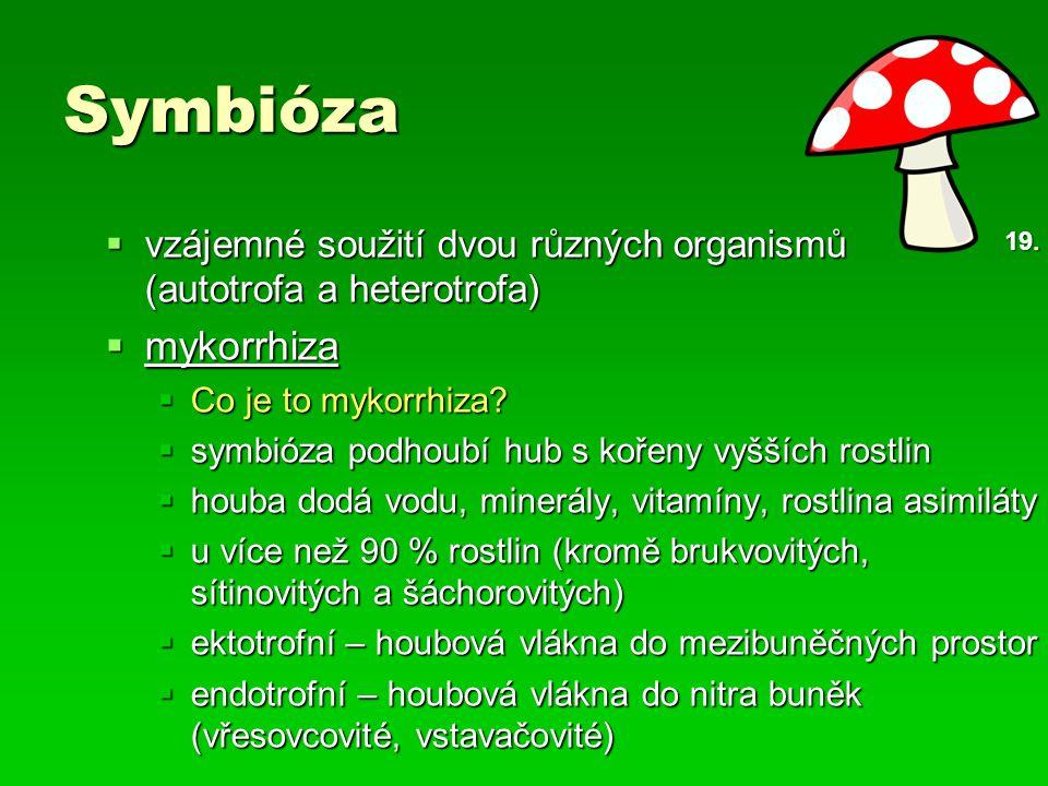 Symbióza  vzájemné soužití dvou různých organismů (autotrofa a heterotrofa)  mykorrhiza  Co je to mykorrhiza?  symbióza podhoubí hub s kořeny vyšš