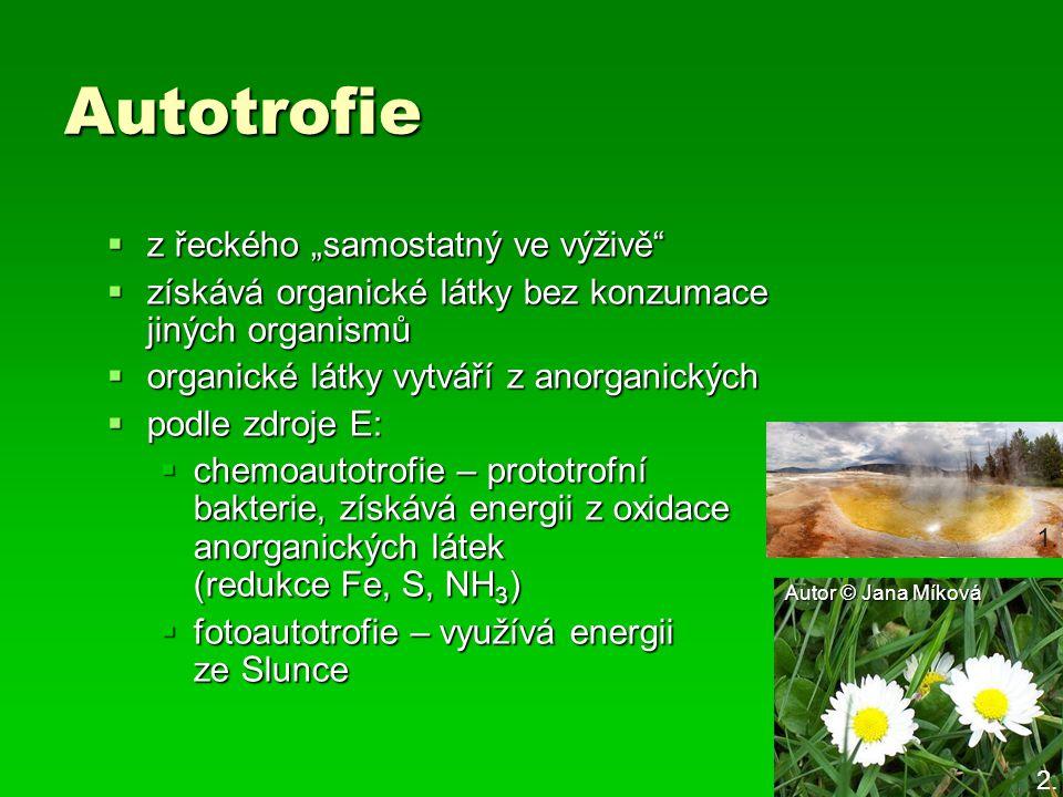 """Autotrofie  z řeckého """"samostatný ve výživě""""  získává organické látky bez konzumace jiných organismů  organické látky vytváří z anorganických  pod"""