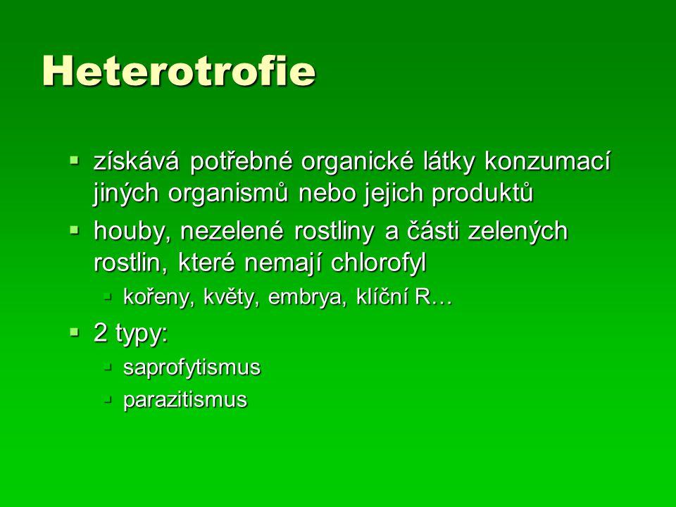 Heterotrofie  získává potřebné organické látky konzumací jiných organismů nebo jejich produktů  houby, nezelené rostliny a části zelených rostlin, k