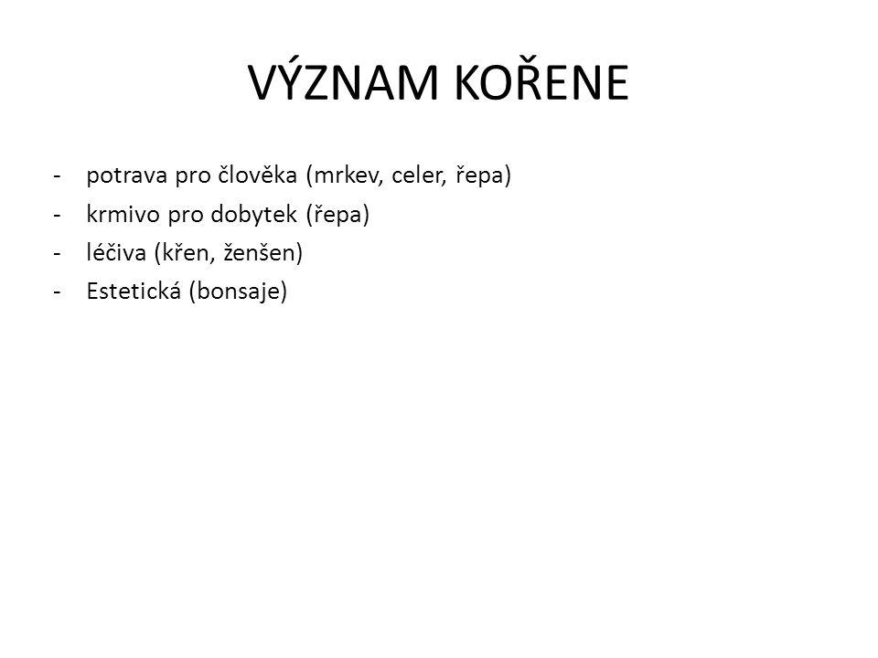 VÝZNAM KOŘENE -potrava pro člověka (mrkev, celer, řepa) -krmivo pro dobytek (řepa) -léčiva (křen, ženšen) -Estetická (bonsaje)