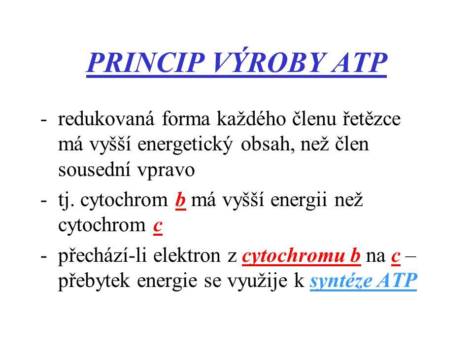 PRINCIP VÝROBY ATP -redukovaná forma každého členu řetězce má vyšší energetický obsah, než člen sousední vpravo -tj.