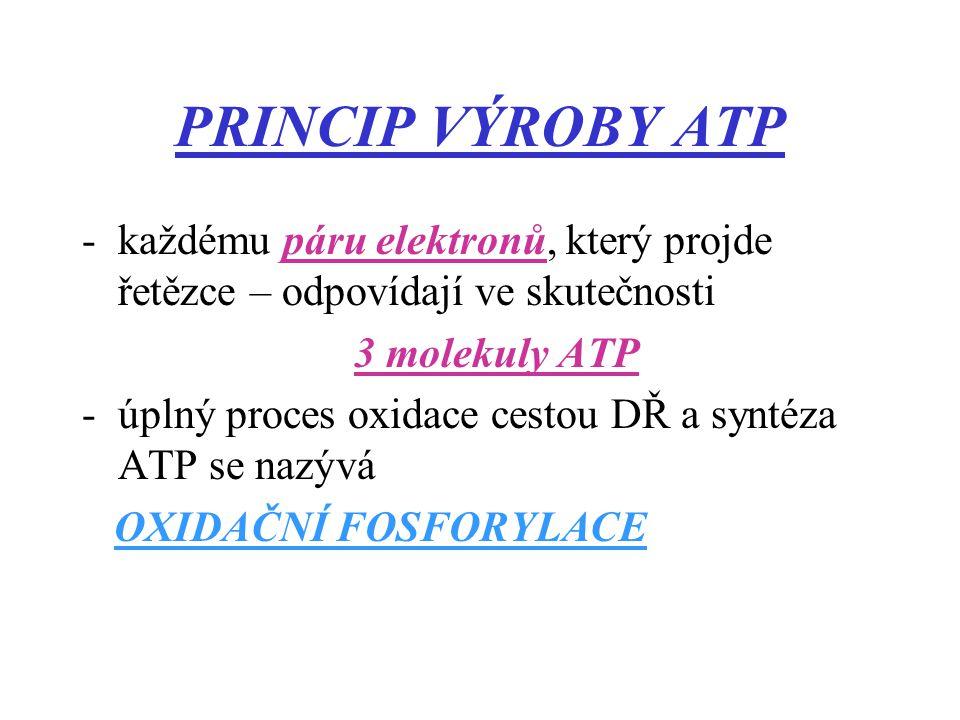 PRINCIP VÝROBY ATP -každému páru elektronů, který projde řetězce – odpovídají ve skutečnosti 3 molekuly ATP -úplný proces oxidace cestou DŘ a syntéza ATP se nazývá OXIDAČNÍ FOSFORYLACE