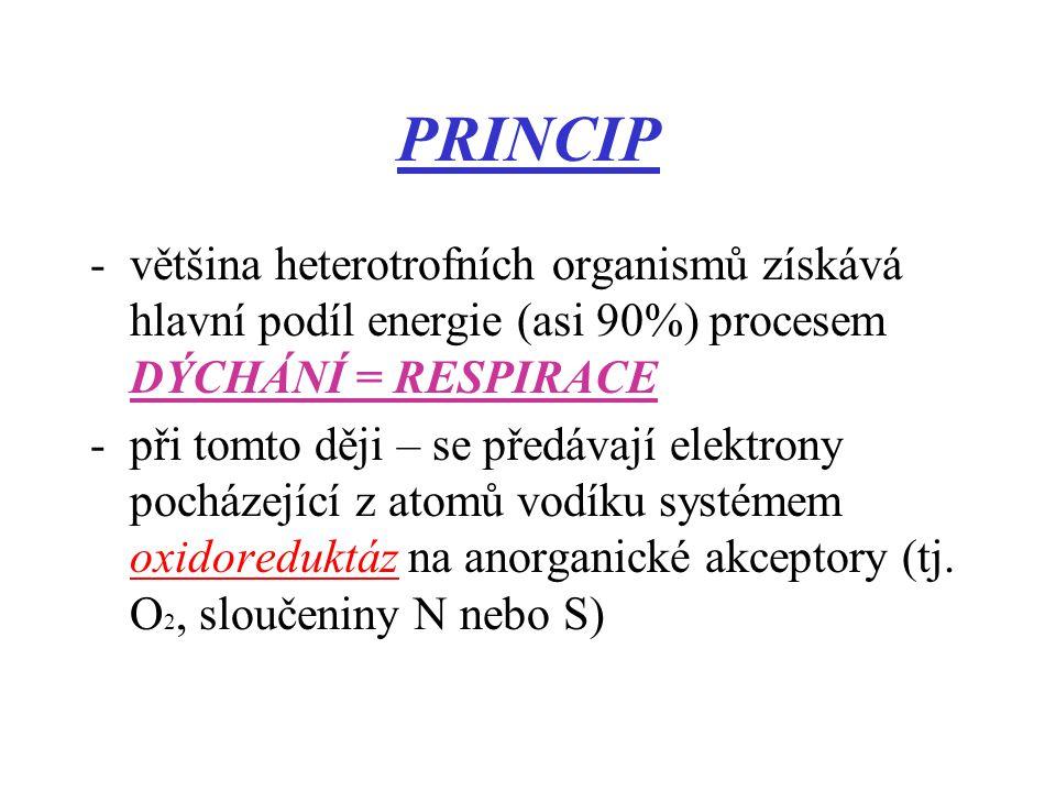 PRINCIP -většina heterotrofních organismů získává hlavní podíl energie (asi 90%) procesem DÝCHÁNÍ = RESPIRACE -při tomto ději – se předávají elektrony pocházející z atomů vodíku systémem oxidoreduktáz na anorganické akceptory (tj.