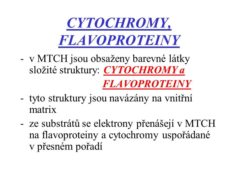 CYTOCHROMY, FLAVOPROTEINY -v MTCH jsou obsaženy barevné látky složité struktury: CYTOCHROMY a FLAVOPROTEINY -tyto struktury jsou navázány na vnitřní matrix -ze substrátů se elektrony přenášejí v MTCH na flavoproteiny a cytochromy uspořádané v přesném pořadí