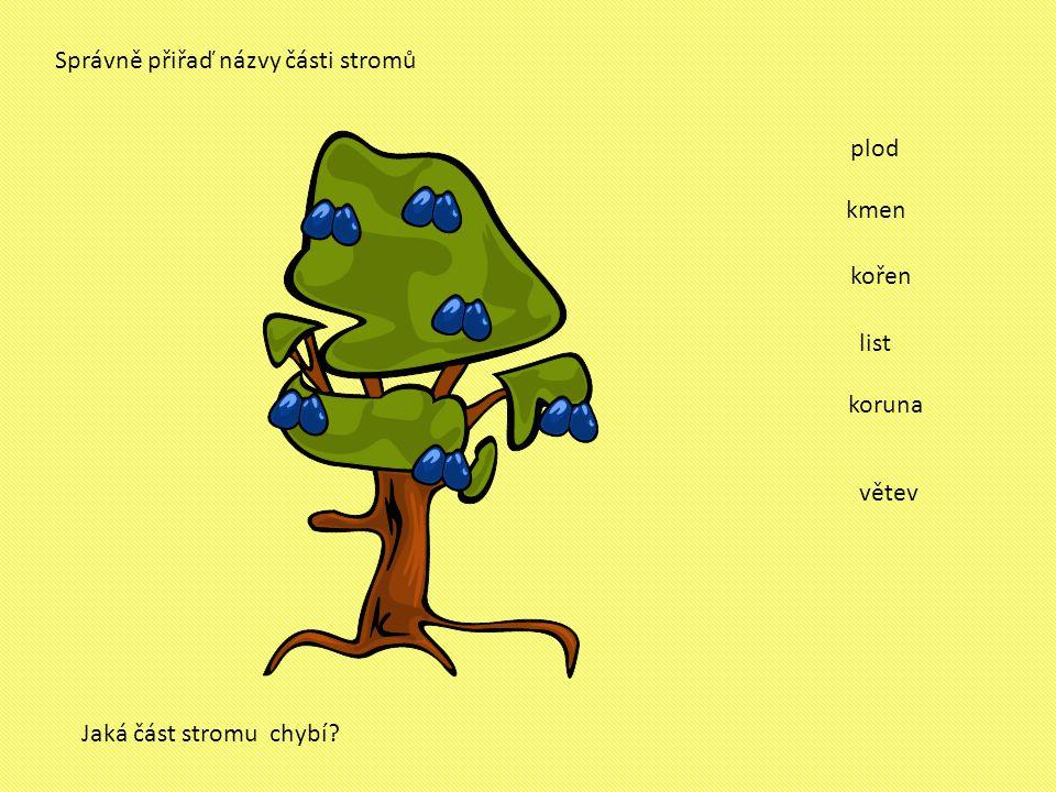 Správně přiřaď názvy části stromů kmen kořen koruna list plod Jaká část stromu chybí? větev