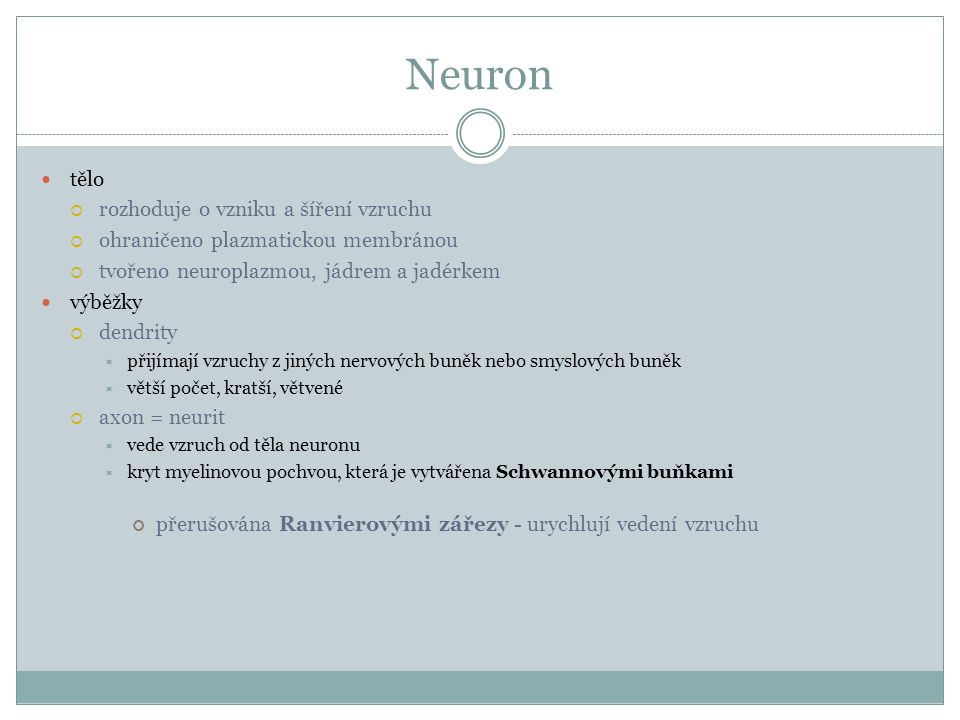 Neuron tělo  rozhoduje o vzniku a šíření vzruchu  ohraničeno plazmatickou membránou  tvořeno neuroplazmou, jádrem a jadérkem výběžky  dendrity  p