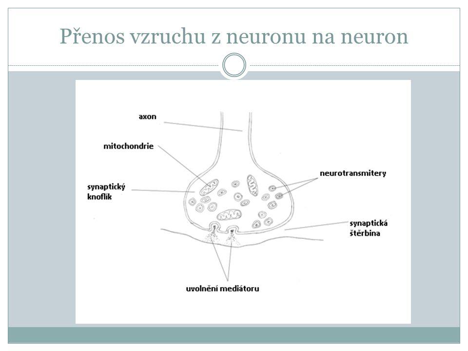 umožňují přenos podráždění z neuronu na sousední buňku dojde-li do synapse podráždění, vylijí se ze synaptického výběžku váčky s neurotransmiterem (nazývaným také mediátor ), který se uvolní do štěrbiny mezi buňkami a u sousední buňky vyvolá podráždění ve štěrbině je však neurotransmiter brzy rozložen zvláštními enzymy, aby nepůsobil příliš dlouho neurotransmiterem (mediátorem) je např.