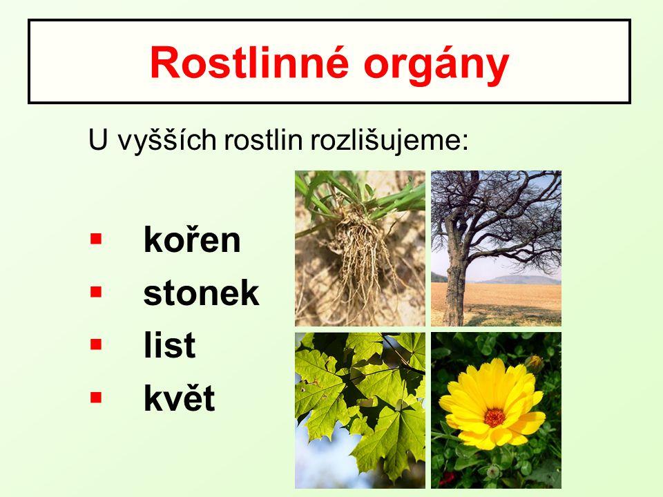  Charakteristika kořene  Funkce kořene  Kořenový systém  Stavba kořene  Příjem vody kořenem  Přeměny kořene Obsah