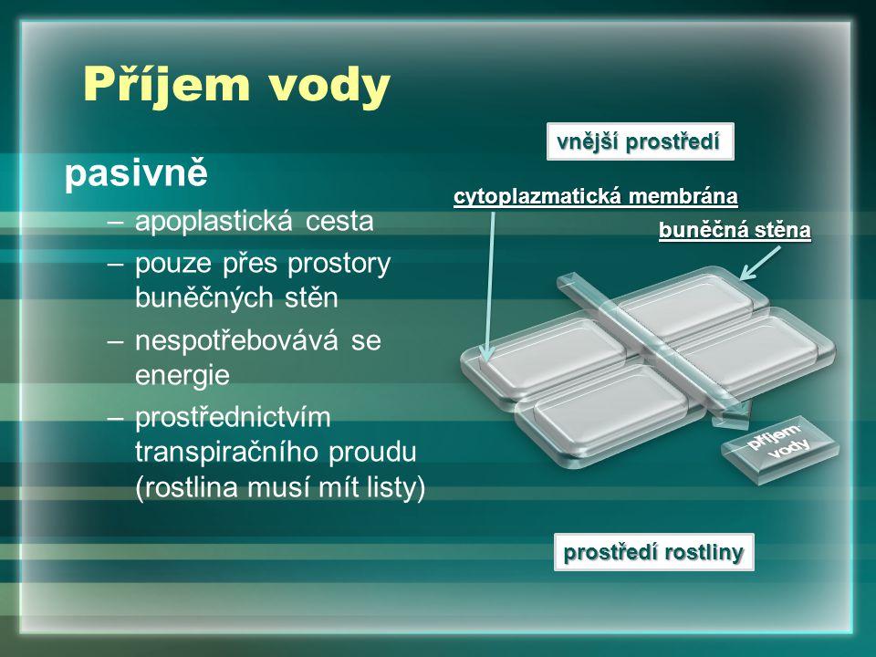 Příjem vody pasivně –apoplastická cesta –pouze přes prostory buněčných stěn –nespotřebovává se energie –prostřednictvím transpiračního proudu (rostlina musí mít listy) vnější prostředí prostředí rostliny buněčná stěna cytoplazmatická membrána