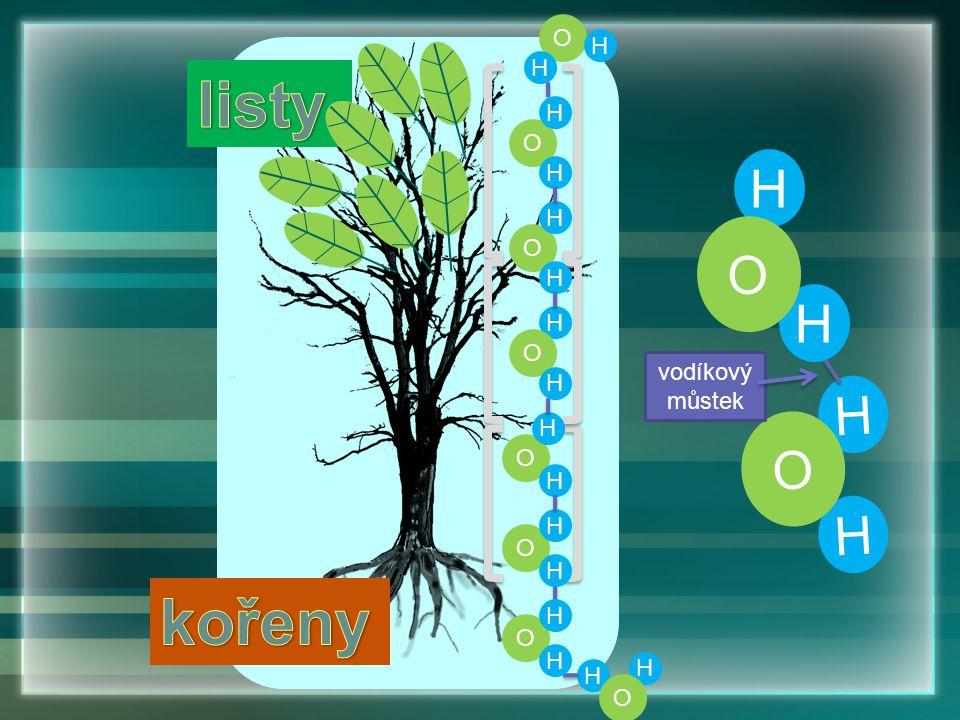 Kořenový vztlak vytlačuje vodu do výše položených pletiv v rostlině hlavně na jaře aktivní příjem vody