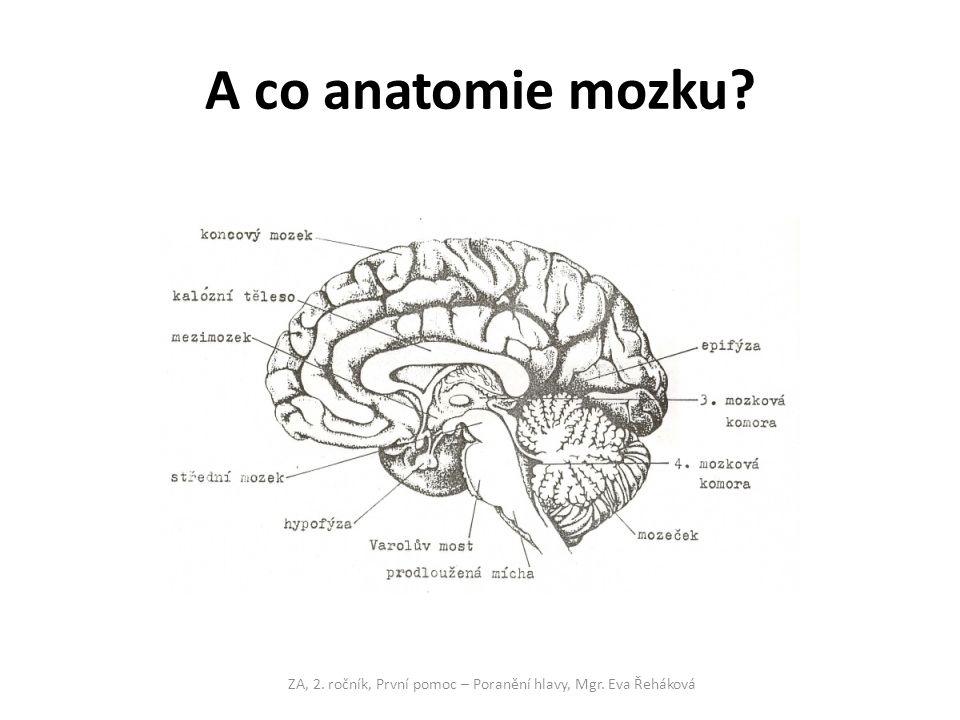 A co anatomie mozku? ZA, 2. ročník, První pomoc – Poranění hlavy, Mgr. Eva Řeháková