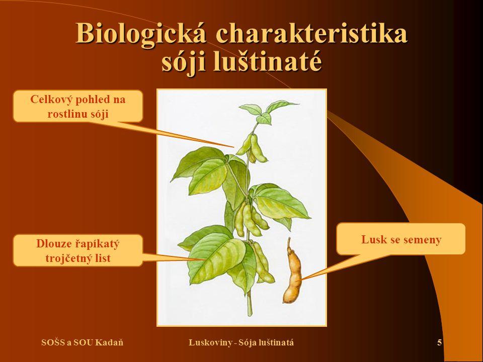 SOŠS a SOU KadaňLuskoviny - Sója luštinatá5 Biologická charakteristika sóji luštinaté Lusk se semeny Dlouze řapíkatý trojčetný list Celkový pohled na