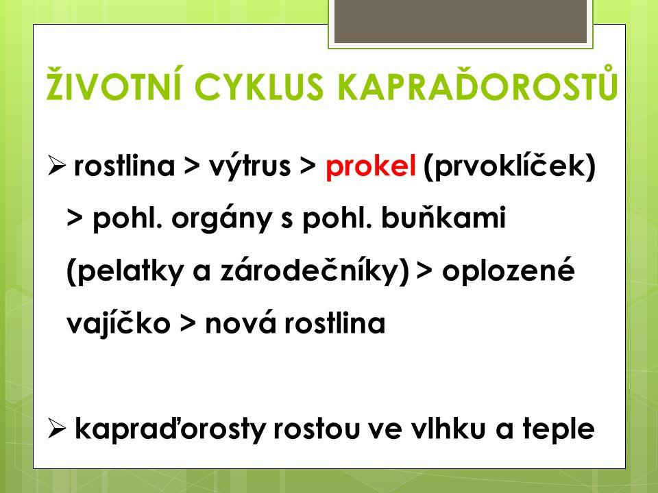 ŽIVOTNÍ CYKLUS KAPRAĎOROSTŮ  rostlina > výtrus > prokel (prvoklíček) > pohl. orgány s pohl. buňkami (pelatky a zárodečníky) > oplozené vajíčko > nová