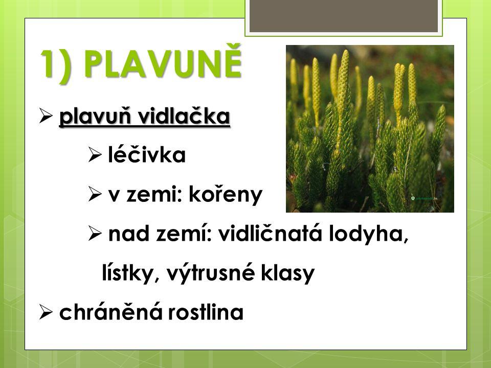 1) PLAVUNĚ plavuň vidlačka  plavuň vidlačka  léčivka  v zemi: kořeny  nad zemí: vidličnatá lodyha, lístky, výtrusné klasy  chráněná rostlina