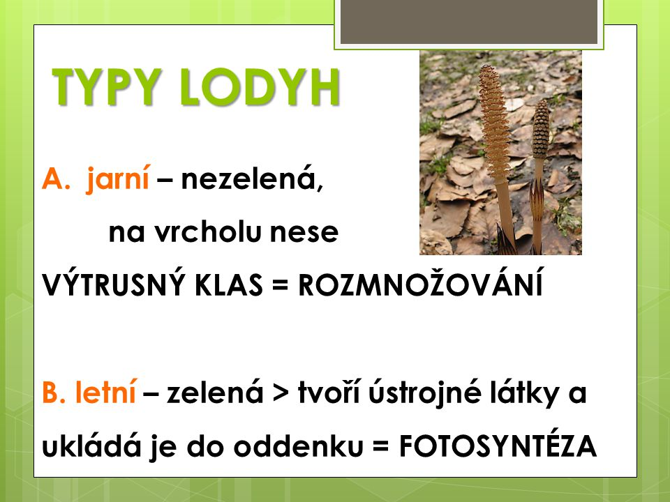  http://leccos.com/index.php/clanky/epifyt http://leccos.com/index.php/clanky/epifyt  http://cs.wikipedia.org/wiki/Soubor:DirkvdM_red_flat_epiph yte.jpg http://cs.wikipedia.org/wiki/Soubor:DirkvdM_red_flat_epiph yte.jpg  http://www.biomach.cz/biologie-rostlin/system-a-evoluce- rostlin/kapradorosty http://www.biomach.cz/biologie-rostlin/system-a-evoluce- rostlin/kapradorosty  http://cs.wikipedia.org/wiki/Papratka_sami%C4%8D%C3%A D http://cs.wikipedia.org/wiki/Papratka_sami%C4%8D%C3%A D  http://botany.cz/cs/equisetum-sylvaticum/ http://botany.cz/cs/equisetum-sylvaticum/  http://www.hlasek.com/equisetum_sylvaticum_a3469.html http://www.hlasek.com/equisetum_sylvaticum_a3469.html  http://www.nahuby.sk/obrazok_detail.php?obrazok_id=290 80 http://www.nahuby.sk/obrazok_detail.php?obrazok_id=290 80  http://www.pestovani.in/cz/Lycopodium-plavun/ http://www.pestovani.in/cz/Lycopodium-plavun/  Věra Čabradová a kol., PŘÍRODOPIS 7, nakladatelství FRAUS 2005