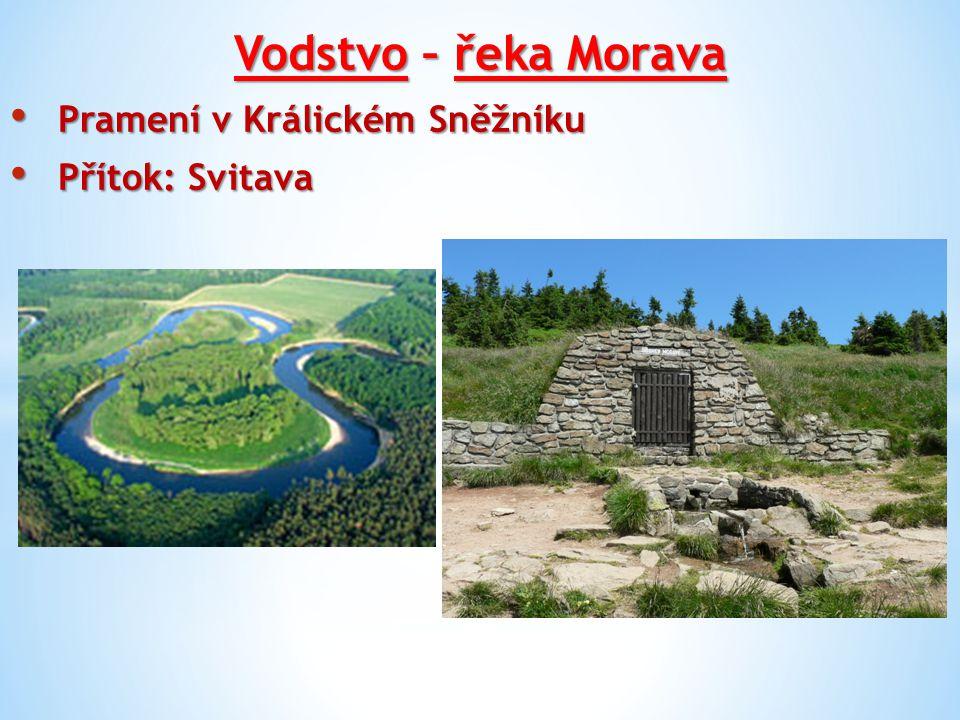 Vodstvo – řeka Morava Pramení v Králickém Sněžníku Pramení v Králickém Sněžníku Přítok: Svitava Přítok: Svitava